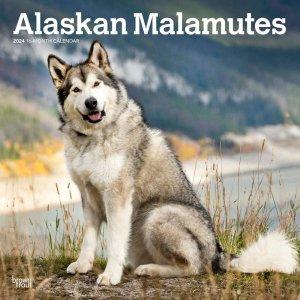 Brown trout アラスカンマラミュート カレンダー Alaskan Malamutes