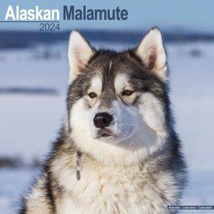 Avonside アラスカンマラミュート カレンダー