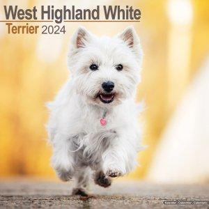 Avonside ウエストハイランドホワイトテリア---West Highland Terrier