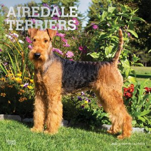 BrownTrout エアデールテリア---AIREDALE TERRIERS