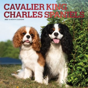BrownTrout キャバリアキングチャールズスパニエル カレンダー Cavalier king charles spaniels