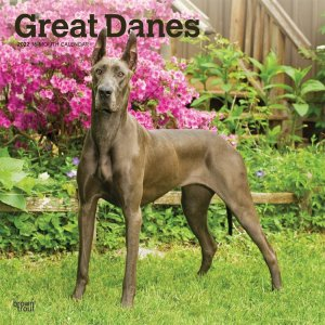 BrownTrout グレートデーン カレンダー Great Danes