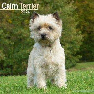 Avonside ケアンテリア カレンダー Cairn Terrier