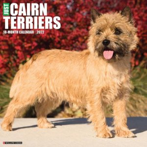WillowCreek ケアンテリア カレンダー Cairn Terrier