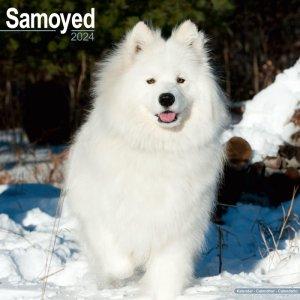 Avonside サモエド カレンダー Samoyed