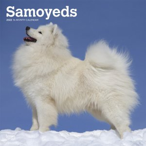 BrownTrout サモエド カレンダー Samoyeds