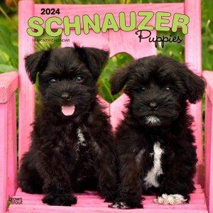 BrownTrout シュナウザー【パピー】カレンダー Schnauzer Puppies