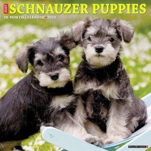 WillowCreek シュナウザー【パピー】カレンダー JUST Schnauzer Puppies