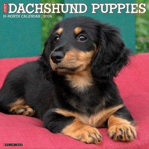 WillowCreek ダックスフンド【パピー】 カレンダー JUST Dachshund Puppies