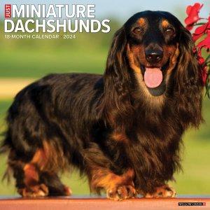 WillowCreek ミニチュアダックスフンド カレンダー---JUST Miniature Dachshunds