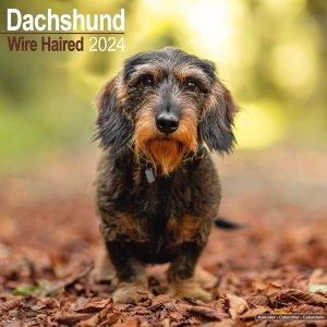 Avonside ワイヤーヘアードダックスフンド カレンダー Wirehaired Dachshund