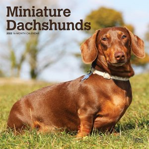 BrownTrout ミニチュアダックスフンド カレンダー Miniature Dachshunds