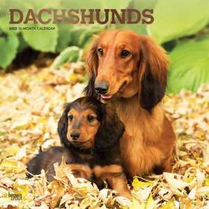 BrownTrout ダックスフンド カレンダー Dachshunds