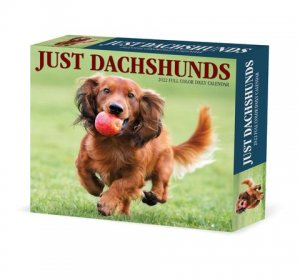 Willow Creek ダックスフンド【日めくりカレンダー】 JUST Dachshunds