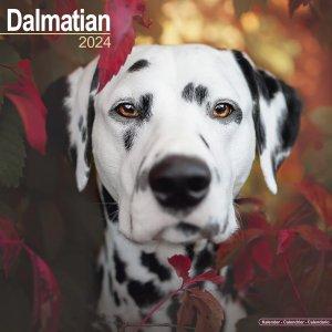 Avonside ダルメシアン カレンダー Dalmatian