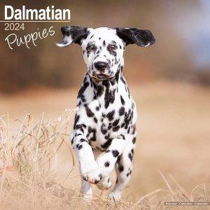 Avonside ダルメシアン【パピー】 カレンダー Dalmatian Puppies