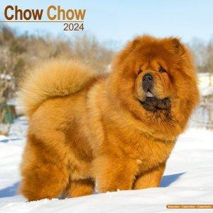 Avonside チャウチャウ--- Chow chow