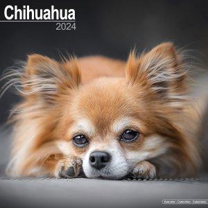 Avonside チワワ カレンダー Chihuahua