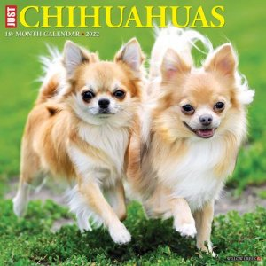WillowCreek チワワ カレンダー JUST Chihuahuas