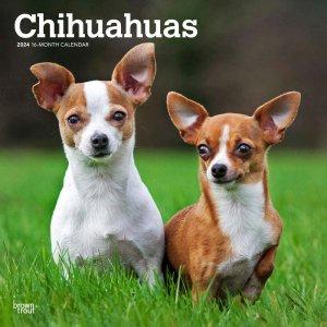 BrownTrout チワワ カレンダー --- Chihuahuas