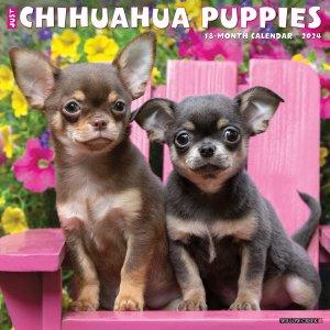 WillowCreek チワワ【パピー】 カレンダー ---Just Chihuahua Puppies