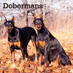 BrownTrout ドーベルマン カレンダー Doberman