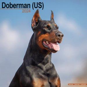 Avonside ドーベルマン(US)カレンダー Doberman