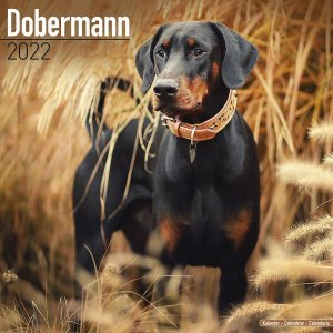 Avonside ドーベルマン カレンダー Doberman