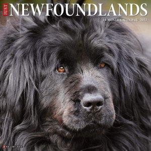 WillowCreek ニューファウンドランド カレンダー JUST Newhoundlands