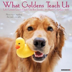 What Goldens Teach Us 月めくりカレンダー