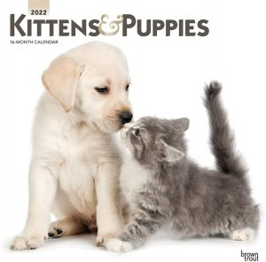Kittens & Puppies 月めくりカレンダー Browntrout