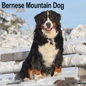 Avonside バーニーズマウンテンドッグ カレンダー Bernese Mountain Dog