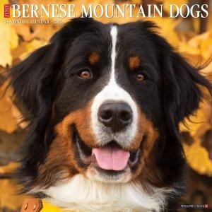 WillowCreek バーニーズマウンテンドッグ カレンダー JUST Bernese Mountain Dogs