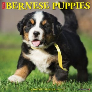 WillowCreek バーニーズマウンテンドッグ【パピー】カレンダー Just Bernese Mountain Puppies