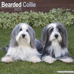Avonside ビアデッドコリー カレンダー Bearded Collie