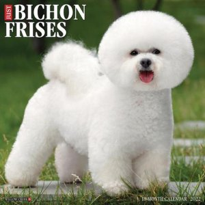 WillowCreek ビションフリーゼ カレンダー JUST Bichon Frises