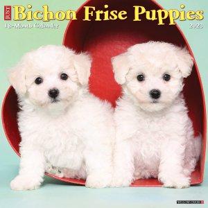 WillowCreek ビションフリーゼ【パピー】カレンダー JUST Bichon Frise Puppies