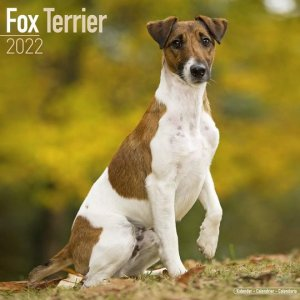 Avonside フォックステリア カレンダー Fox terrier