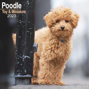 Avonside トイ&ミニチュアプードル カレンダー Poodle Toy & Miniature