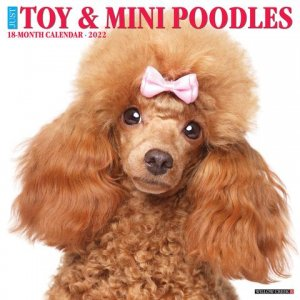 WillowCreek トイ&ミニチュアプードル カレンダー JUST Toy & Miniature Poodle