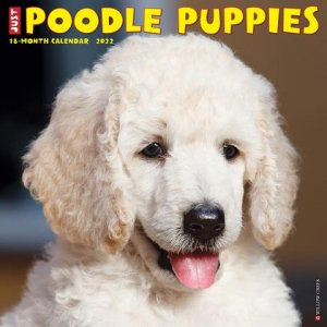 WillowCreek プードル【パピー】 カレンダー JUST Poodle Puppies