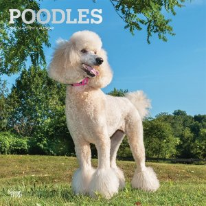 BrownTrout プードル カレンダー Poodle