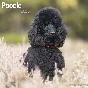 Avonside プードル カレンダー poodle