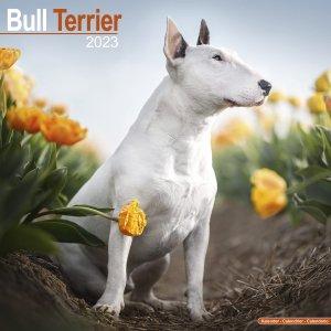 Avonside ブルテリア カレンダー Bull terrier
