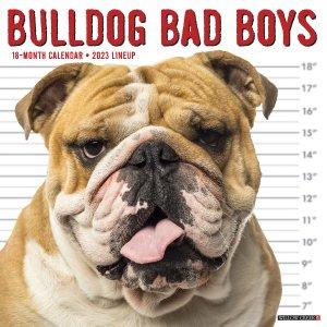 WillowCreek Bad Boysブルドッグ カレンダー