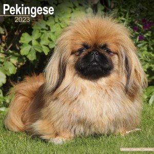 Avonside ペキニーズ カレンダー Pekingese