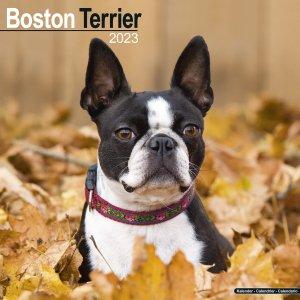 Avonside ボストンテリア カレンダー Boston terrier