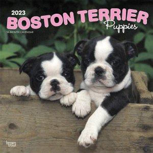 BrownTrout ボストンテリア【パピー】 カレンダー