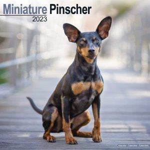 Avonside ミニチュアピンシャー カレンダー Miniature Pinscher