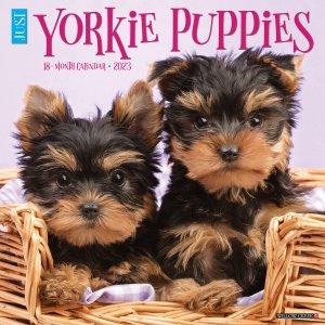 WillowCreek ヨークシャーテリア【パピー】 カレンダー JUST Yorkie Puppies